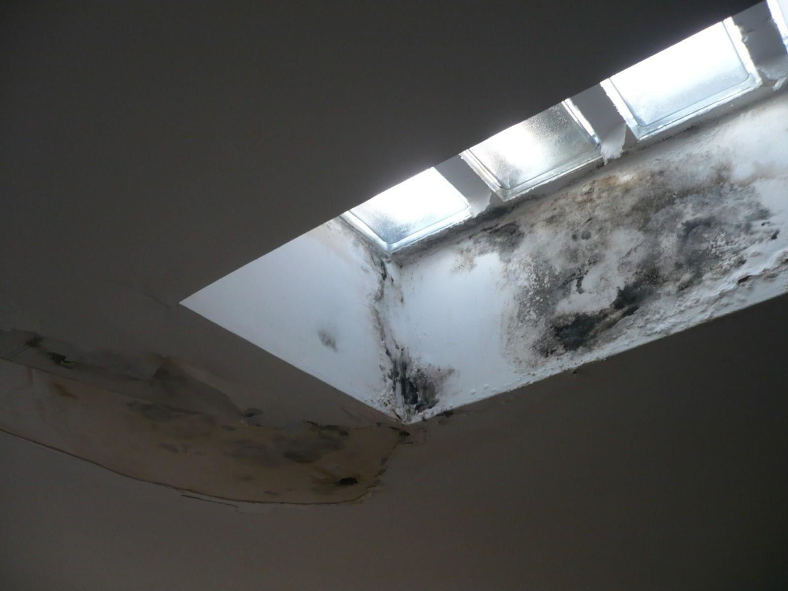 Moisissures sur les plafonds et les angles des murs dans louest lyonnais