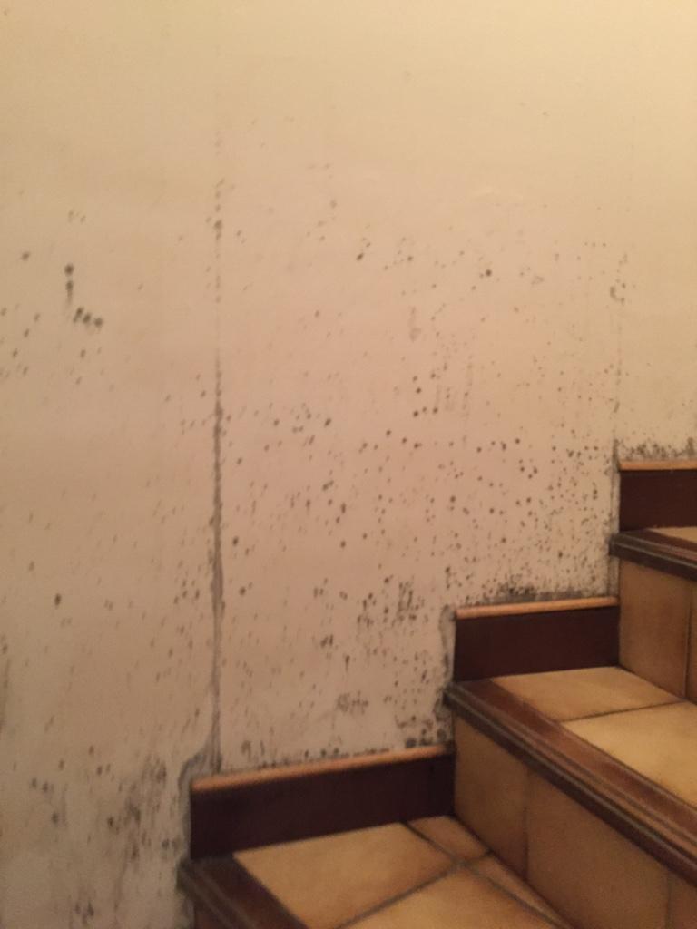 moisissures et champignons sur les murs entreprise pour traitement de l 39 humidit des murs. Black Bedroom Furniture Sets. Home Design Ideas