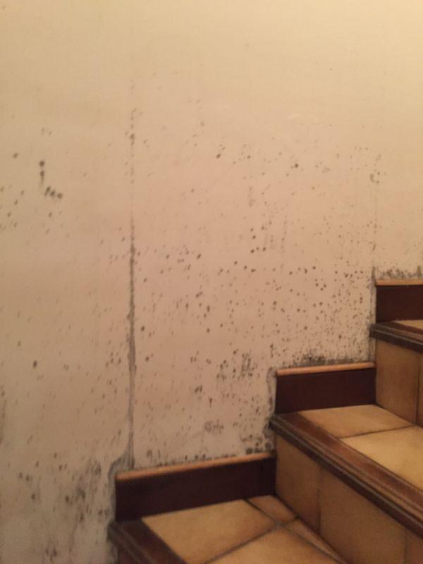 moisissures et champignons sur les murs traitement. Black Bedroom Furniture Sets. Home Design Ideas